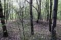 Schandorf - Tumulis in Bauernwald III (06).jpg