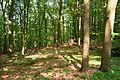 Schleswig-Holstein, Breitenburg, Landschaftsschutzgebiet Eichenwald Nordoe NIK 6368.JPG