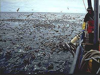 Longline fishing - Seabirds with longline fishing vessel