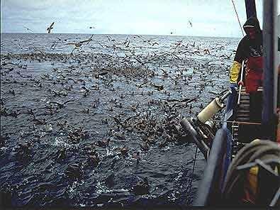 Seabirds longlinersm