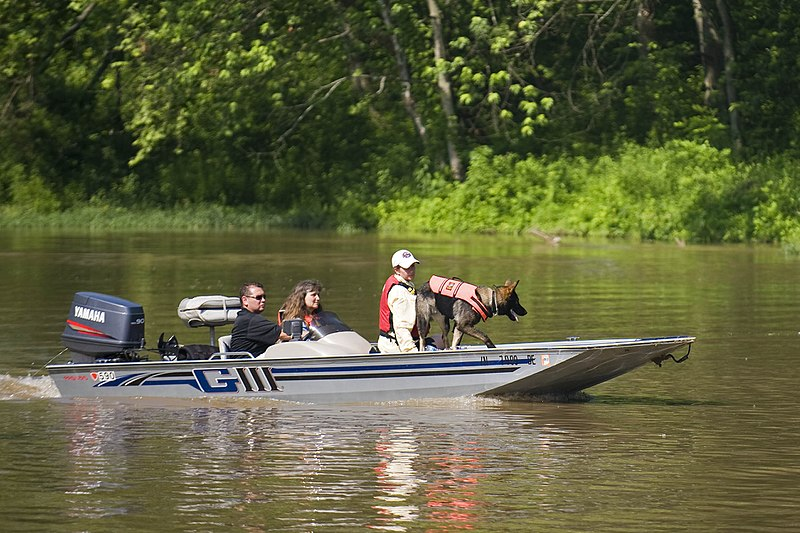 A Search and Rescue dog tracks a scent on the Big Blue River in Edinburgh, Ind., June 4, during the Department of Homeland Security Search and Rescue Conference held at the Camp Atterbury Joint Maneuver Training Center in central Indiana.