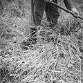 Serie Landmijnen ruimen in Hoek van Holland, Bestanddeelnr 900-6466.jpg