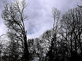Shadowsandtalltrees.jpg