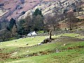 Sheep near Chapel Stile - geograph.org.uk - 1803907.jpg