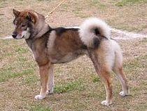 nexgard chien 10 25 kg