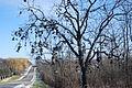 Shoe Tree Woodstock, IL.JPG