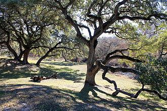 Sisterdale, Texas - Image: Sisterdale 3