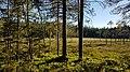Skuleskogen 20170628 06.jpg