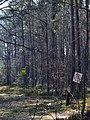 Skulyn Kovelskyi Volynska-Sosnyna-1 nature monument-view with guard board.jpg