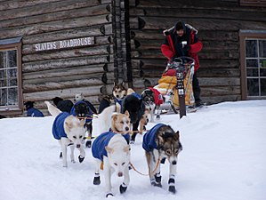 "A team of dogs wearing coats and booties begins pulling a musher away from a log cabin with a plaque labeled ""Slaven's Roadhouse"""
