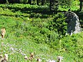Sooty Grouse (e6be600f19d743d5921145a87b998b1b).jpg