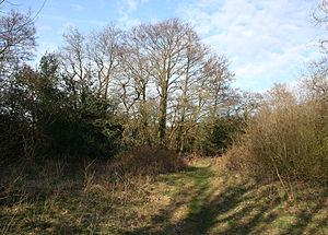 Sound Heath - Grassy heathland and scrub