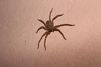 Spider at home.jpg