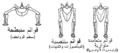 Sprawling and erect hip joints - horiz ar.png