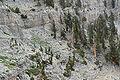 Spring Mountains North Loop trail 12.jpg