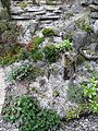 Spring in Our Garden-Crevice Rock Garden - Flickr - brewbooks.jpg