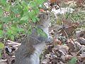 Squirrel 017.jpg