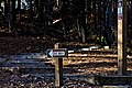 Stairs to the Trail (32708247890).jpg