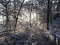 Stappersven in sneeuw 04.JPG