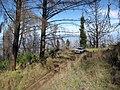 Starr-101006-9206-Sequoia sempervirens-habit with Tahoe-Polipoli-Maui (25028165446).jpg