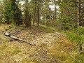 Stensättning Skön 62 Sundsvall 09.jpg
