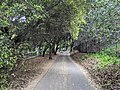 Stevens Creek Trail in Mountain View.jpg