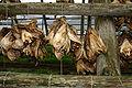 Stockfisch-Vesterålen-3.jpg