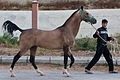 Studfarm in Turkmenistan - Flickr - Kerri-Jo (113).jpg