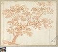 Studie van een boom, circa 1712 - circa 1799, Groeningemuseum, 0041442000.jpg