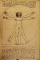 Studio del Corpo Umano - Leonardo da Vinci.png