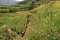 Stymfalia-east gardens.jpg
