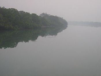 Sundarban , delta , forest 03.jpg