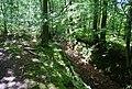 Sunken Bridleway, Oldbury Woods - geograph.org.uk - 856742.jpg