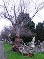 Sutton Road Cemetery - geograph.org.uk - 310608.jpg