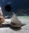 Szkola pod zaglami Nausicaä Centre National de la Mer fishes 2.jpg