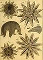 Tableau encyclopédique et méthodique des trois règnes de la nature (1791) (14581473259).jpg