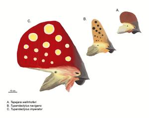 Tapejara (pterosaur) - Reconstructed profiles of (from top to bottom) Tapejara wellnhoferi, Tupandactylus navigans, and Tupandactylus imperator