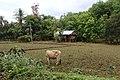 Taungoo, Myanmar (Burma) - panoramio (89).jpg