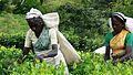 Tea Plantation Workers Sri Lanka.jpg