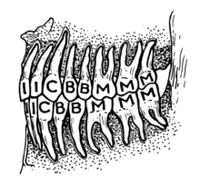 Teeth (PSF).png