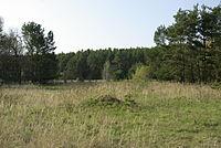 Tennenloher Forst 009.JPG