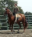 Tennessee Walking Horse.jpg