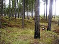 Tentsmuir Forest - geograph.org.uk - 1450105.jpg