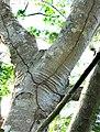 Termite-nest-tunnels.jpg