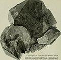 The American Museum journal (c1900-(1918)) (17974059519).jpg