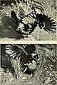 The Australian zoologist (1954) (20324648386).jpg