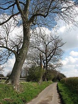 The Moor past paddock - geograph.org.uk - 755936