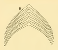The Osteology of the Reptiles-138 iujhg kiujhb kjhb fg.png