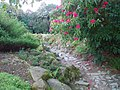 The Ravine garden at Heligan.jpg