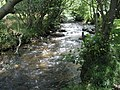 The River Heddon flows between the trees - geograph.org.uk - 917550.jpg